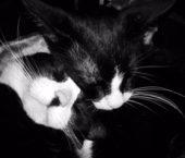 charlie-presley-camden-cat-sitter