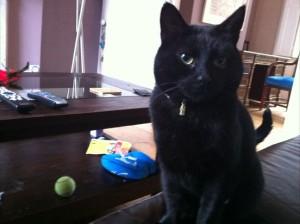 Cat sitter Islington