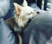Puppy Sitter London