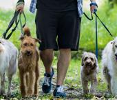 Group Dog Walk Islington