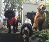 Group Dog Walk Highbury