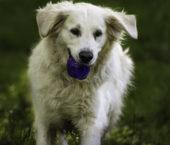 Solo Dog Walker Islington