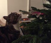 Christmas cat sitter
